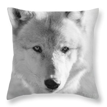 White Wolf Throw Pillow