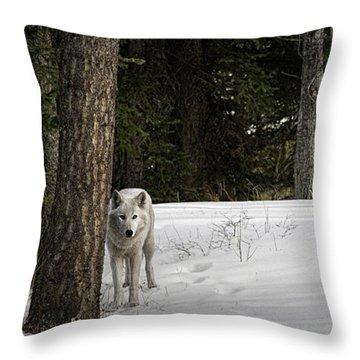 White Wolf Throw Pillow by Brad Allen Fine Art