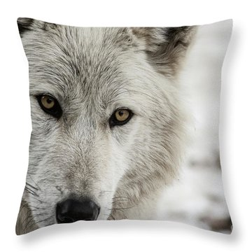 White Wolf II Throw Pillow