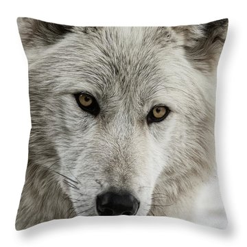 White Wolf II Throw Pillow