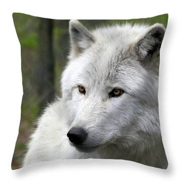 White Wolf With Golden Eyes Throw Pillow