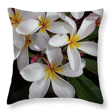 White/yellow Plumerias In Bloom Throw Pillow