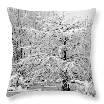 Throw Pillow featuring the photograph Whiteout In The Wetlands by John Harding