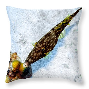 Throw Pillow featuring the photograph Whitespotted Filefish by Perla Copernik