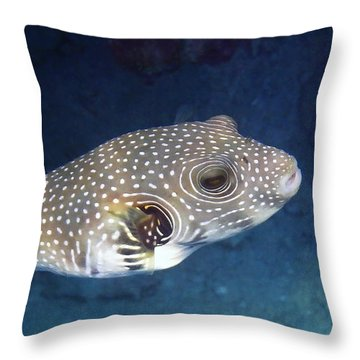 Whitespotted Pufferfish Closeup Throw Pillow