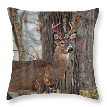 Whitetail #60 Throw Pillow