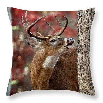 Whitetail #682 Throw Pillow