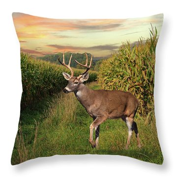 White-tailed Buck In Cornfield Throw Pillow