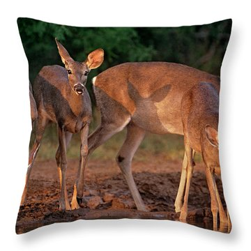 Throw Pillow featuring the photograph Whitetail Deer At Waterhole Texas by Dave Welling