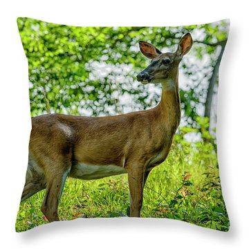 Throw Pillow featuring the photograph Whitetail Deer  by Thomas R Fletcher