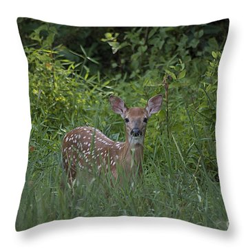 Whitetail Fawn 20120711_37a Throw Pillow by Tina Hopkins