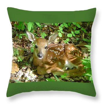 Whitetail Fawn II Throw Pillow