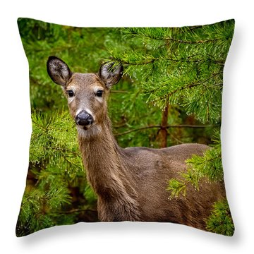 Whitetail In The Pines Throw Pillow