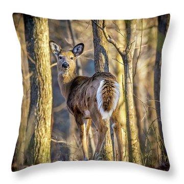 Whitetail Winter Morning Throw Pillow