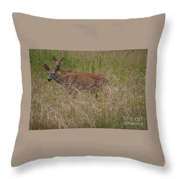 Whitetail With Fawn 20120707_09a Throw Pillow by Tina Hopkins