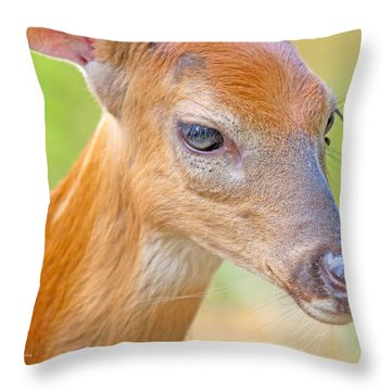 Throw Pillow featuring the photograph Whitetailed Deer Fawn Portrait by A Gurmankin