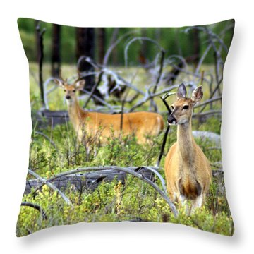 Whitetails Throw Pillow by Marty Koch