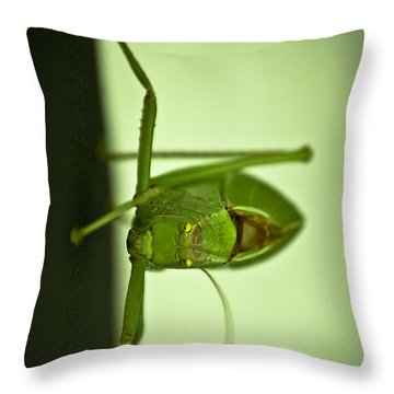 Who Are You Eyeballin' Throw Pillow by DigiArt Diaries by Vicky B Fuller