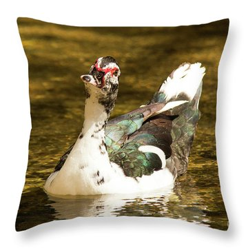 Who Me Wildlife Art By Kaylyn Franks Throw Pillow