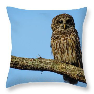 Whooo Throw Pillow