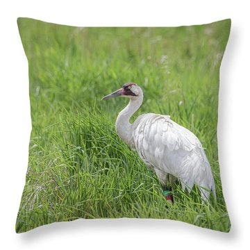 Whooping Crane 2017-12 Throw Pillow