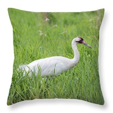 Whooping Crane 2017-2 Throw Pillow