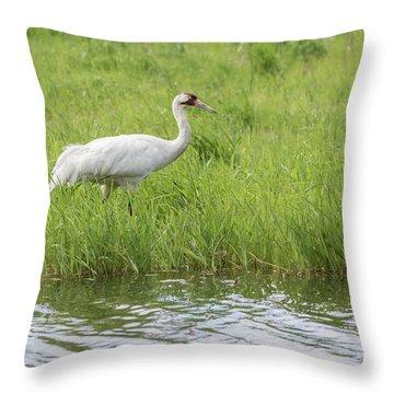 Whooping Crane 2017-6 Throw Pillow