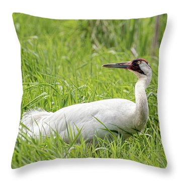 Whooping Crane 2017-9 Throw Pillow