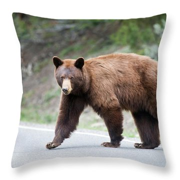 Why Did The Bear Cross The Road Throw Pillow