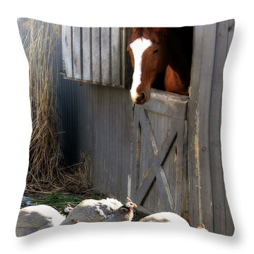 Throw Pillow featuring the photograph Why Did The Guinea Hen Cross The Road by Angela Rath