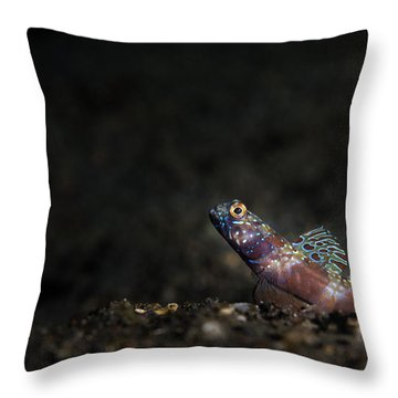 Wide-barred Shrimp Goby Throw Pillow