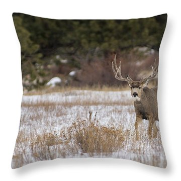Wide Rack Throw Pillow