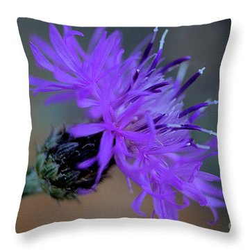 Wild And Beautiful 32 Throw Pillow