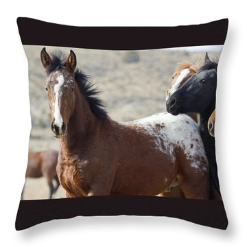 Wild Appaloosa Mustang Horse Throw Pillow