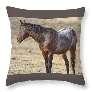 Wild Appaloosa Mustang Stallion Throw Pillow