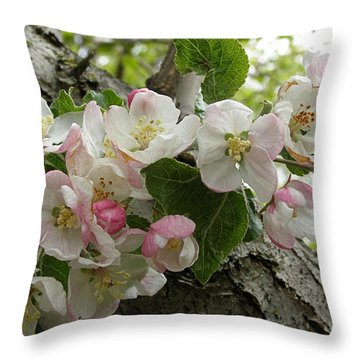 Throw Pillow featuring the photograph Wild Apple Blossoms by Angie Rea