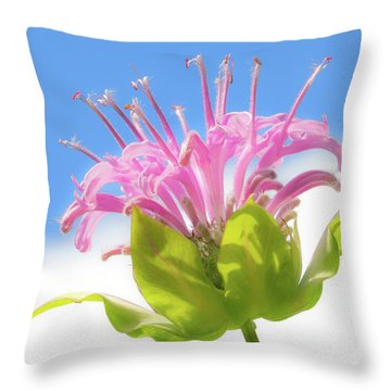 Wild Bergamot Or  Bee Balm Throw Pillow by Jim Hughes