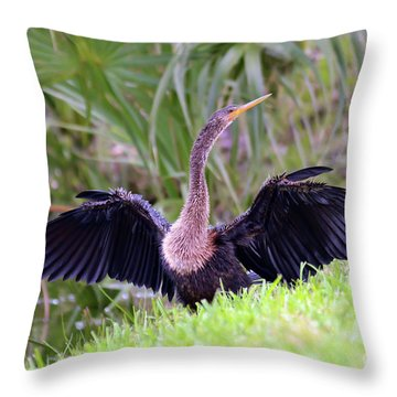 Throw Pillow featuring the photograph Wild Birds - Anhinga by Kerri Farley
