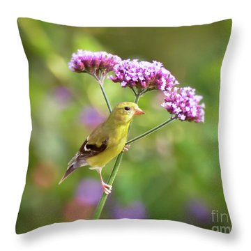 Throw Pillow featuring the photograph Wild Birds - Female Goldfinch by Kerri Farley