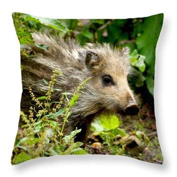 Wild Boar Baby Throw Pillow