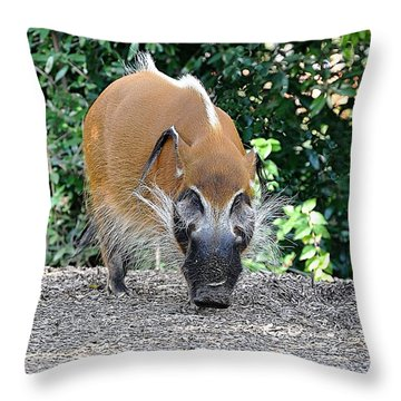 Wild Boar Throw Pillow by Jan Amiss Photography