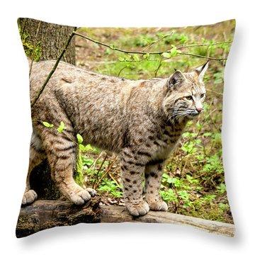 Wild Bobcat Throw Pillow by Teri Virbickis