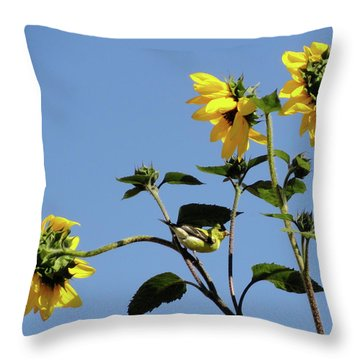 Wild Canary Sunflowers Throw Pillow by Shannon Grissom