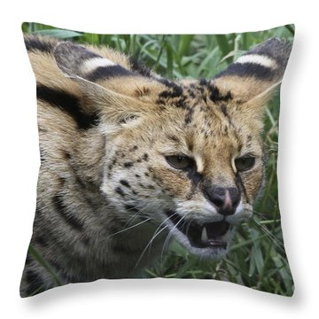 Wild Cat Throw Pillow by Gary Bridger