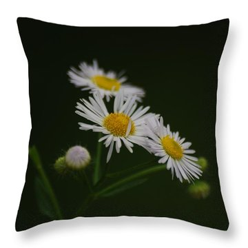 Throw Pillow featuring the photograph Wild Daisy by Ramona Whiteaker