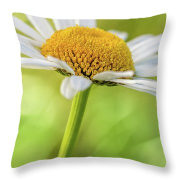 Wild Daisy Throw Pillow