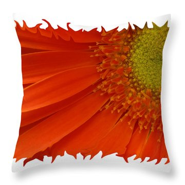 Throw Pillow featuring the photograph Wild Daisy by Shari Jardina