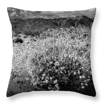 Throw Pillow featuring the photograph Wild Desert Flowers Blooming In Black And White In The Anza-borrego Desert State Park by Randall Nyhof