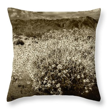 Throw Pillow featuring the photograph Wild Desert Flowers Blooming In Sepia Tone  by Randall Nyhof