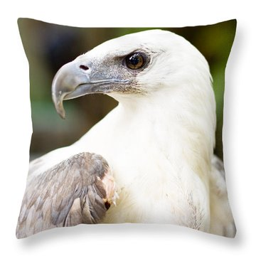 Throw Pillow featuring the photograph Wild Eagle by Jorgo Photography - Wall Art Gallery